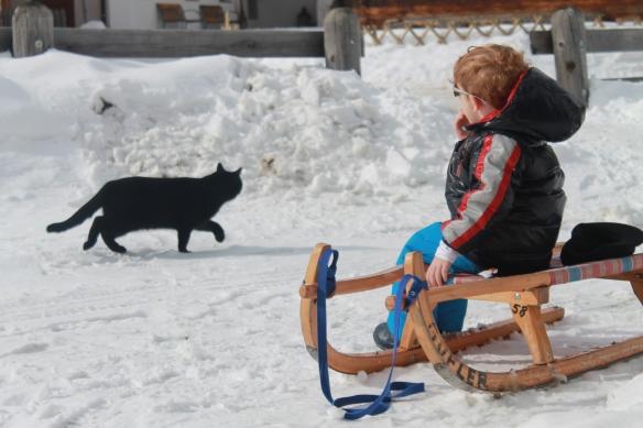 Merenda sulla neve con gatto