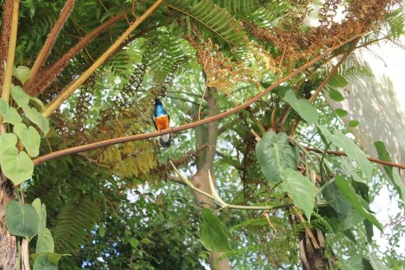 Uccellino alla Biosfera di Genova